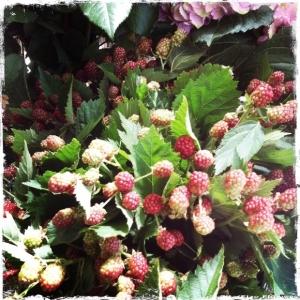 ZitaElzeRaspberriesW_wm